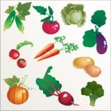 Different Kinds of Vegetables Vector Stock Set Illustrations (Free Download Illustrations)