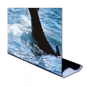"33"" W x 79"" H Whale Shape Good Quality Roll Up Banner Stand (Stand Only)"